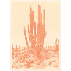 Capricorn Press Saguaro Cactus (peach) 8 X 10 By ($15) ❤ liked on Polyvore featuring home, home decor, wall art, posters, peach wall art, cactus home decor, cactus wall art and cactus poster