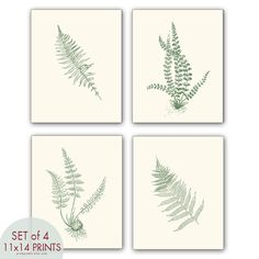 Ferns Garden Botanical Prints (Series D)-Set of 4- 11x14 Prints -(Featured in Cream and Thyme Green). $47.85, via Etsy.