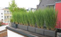 Brise Vue Balcon Bambou Protection : Brise vue sur bambou et jardin