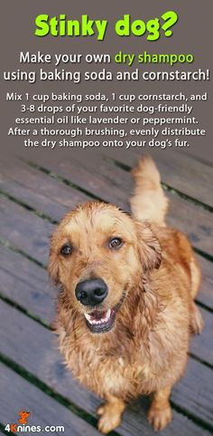 DIY dry dog shampoo: Mix 1 cup baking soda, 1 cup cornstarch, and drops of your favorite dog-friendly essential oil like lavender or peppermint. After a thorough brushing, evenly distribute the dry shampoo onto your dog's fur. Diy Pet, Stinky Dog, Shampooing Sec, Golden Retrievers, Education Canine, Baby Education, Dog Hacks, Pet Health, Health Tips