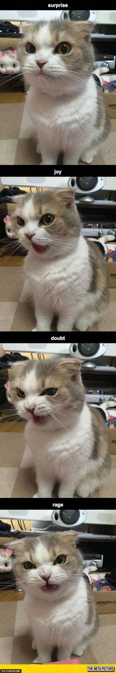fun Funny Cat expressions