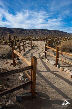 Cactus Garden - Joshua Tree National Park - California