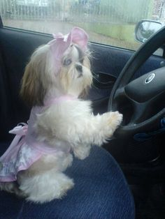 I drive better than mommy!