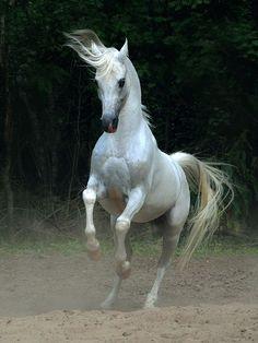Animais tem sentimentos: Cavalos lindos!!!