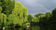 Luisenpark, Mannheim, Germany - I have some wonderful memories at this park. Parks, Places Ive Been, New Experience, Places To Visit, To Go, Germany, Memories, River, City