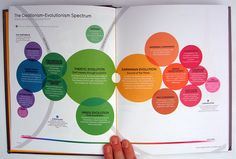 Comparison of diverse beliefs between creationism and evolution in a spectrum diagram from David McCandless' book INformation is Beautiful