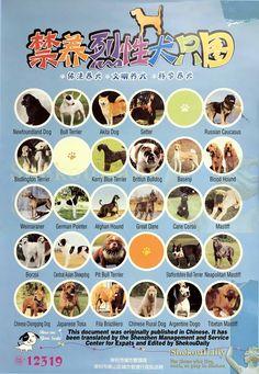 List of Dogs Prohibited as Pets in Shenzhen, China Cane Corso Mastiff, Neapolitan Mastiffs, Shenzhen China, Akita Dog, Dog List, British Bulldog, Afghan Hound, Staffordshire Bull Terrier, Weimaraner