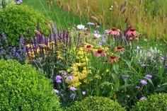 Squires garden centre show garden, box balls and flowers,