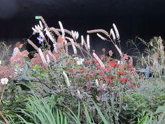 Peter Zumthor, Pavilion, Gallery, Plants, Inspiration, Biblical Inspiration, Roof Rack, Plant, Sheds