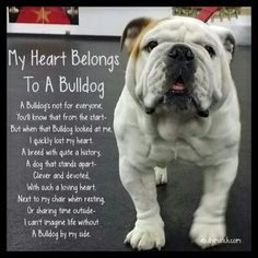 I never thought a bulldog would be right for me but when Dexter was given to us as a surprise, I fell in love :)