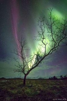 El árbol aurora - Carlos Alipio - Google+