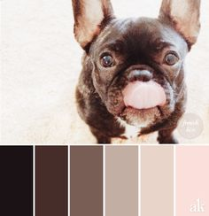 A french-bulldog-inspired color palette