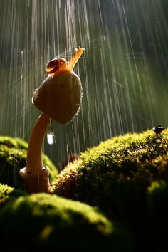 Snail in the rain.