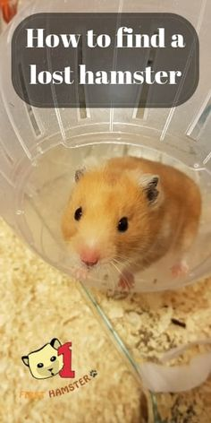 Here's How To Find A Lost Hamster – Find Your Furry Friend