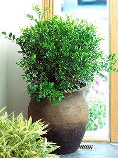 Top Fragrant Houseplants