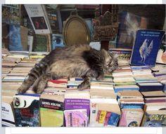 Books ~ Cats   Taking a well-earned break