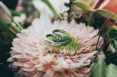 10 Amazing - Alluring Wedding Photography Ideas : Uplifting close up photography of silver colored wedding rings on pink gerbera daisy flower Aperture Photography, Close Up Photography, Wedding Photography, Photography Ideas, Wedding Planning Tips, Wedding Planner, Destination Wedding, Wedding Photo Albums, Wedding Photos