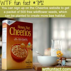 Sign up on Cheerios website to get wildflower seeds for free - WTF Fun Fact