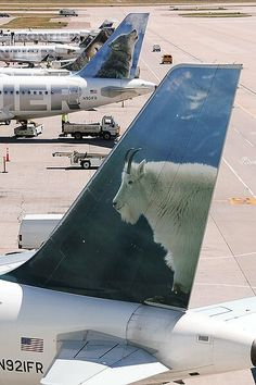 Frontier Airlines Tails Mountain Goat