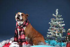 #Bones #pet #photography #capetown #Christmas #cards #photoshoot