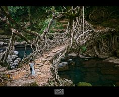 All sizes   The living bridge.   Flickr - Photo Sharing!