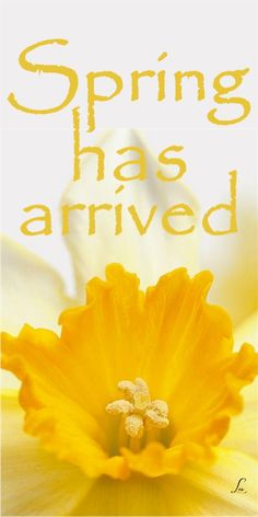 Spring Quotes Entrancing The Artful Year Book  Celebrating The Seasons & Holidays With .