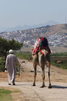 Camel in Morocco. This will be me in two weeks!!!! Ahhh!!
