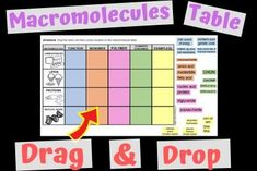 Macromolecules Table – Closer Look at Science High School Biology, Biology Teacher, Teaching Biology, Nucleic Acid, Science Resources, Anatomy And Physiology, Biochemistry, Hands On Activities, Life Science