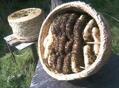 Do not ever forget, USDA outlawed using a bee skep in the US. This is due to fungus growth in the fibrous basket material. Cute, and trust me I want one, but unusable.