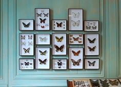 47 New Ideas for diy paper butterflies wall shadow box Butterfly Taxidermy, Taxidermy Decor, Do It Yourself Inspiration, Turbulence Deco, Butterfly Frame, Butterfly Room, Butterfly Wall Decor, Butterfly Project, Butterfly Mobile