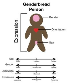The classic Genderbread Person! Gingerperson: How to differentiate between gender, sex, and orientation, & expression