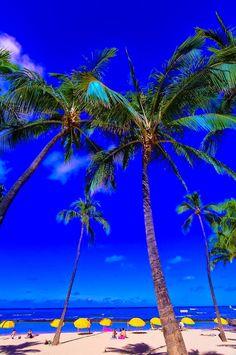 Kuhio Beach, Waikiki, Honolulu, Oahu, Hawaii USA