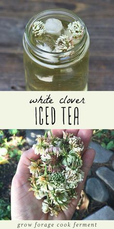 White Clover Iced Tea White clover iced tea is not only delicious but is also high in vitamins and minerals. Learn how to make this tasty and refreshing foraged drink! The post White Clover Iced Tea appeared first on Getränk. Iced Tea Recipes, Herb Recipes, Fast Recipes, Pumpkin Recipes, Healthy Recipes, Edible Wild Plants, Kombucha, Flower Food, Wild Edibles