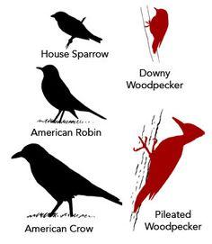 Bird silhouette match Nature Activities, Science Nature, Learning Activities, Children Activities, Downy Woodpecker, Bird Identification, Bird Silhouette, Nature Journal, Nature Study