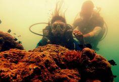 Scuba Diving in the North Bay Islands | Padhaaro
