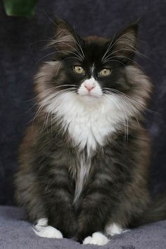 Rooky cat - what a handsome fellow