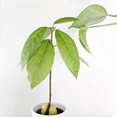 Plant Leaves, Plants, Inspiration, Biblical Inspiration, Plant, Inspirational, Planets, Inhalation