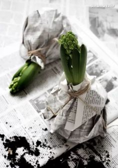 DIY: Hyacinth in the black and white jacket- DIY: Hyazinthe in der schwarz-weißen Jacke Photo by Johanna Eklöf / Formelle Design Spring, Flowers, Bulbs - White Christmas, Christmas Time, Xmas, Fleurs Diy, Black And White Jacket, Black White, Spring Photos, Deco Floral, Plant Design