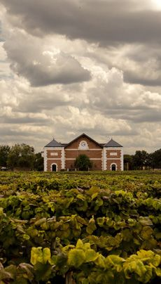 Delaney Vineyards where the grapeseed for our Vinotherapy beauty products comes from