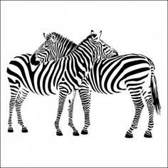 Adesivo de Parede Animal Duas Zebras