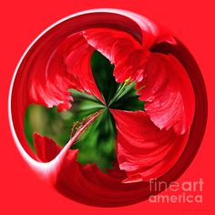#RED #HIBISCUS #ORB #Art #Photography Quality Prints and Cards at:  http://kaye-menner.artistwebsites.com/featured/red-hibiscus-orb-kaye-menner.html  -