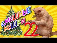 Смешные кошки 22 ● Приколы с животными зима 2014 ● Funny cats vine compilation ● Part 22