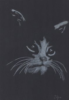 Kitten Coloured pencil on acid-free paper 25x30cm. It has been a while since I have done a white on black piece, so here is my interpretation of a kitten.