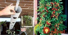Tento chlapík vám ukáže skvelý trik, ako vypestovať bohatú úrodu jahôd na malom balkóne!