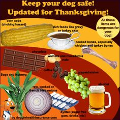 Keep your dog healthy during Thanksgiving Dinner