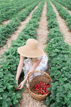 Checking off a Summer bucket list item in my favorite floral dress Strawberry Farm, Strawberry Picking, Strawberry Fields, Strawberry Patch, Country Farm, Country Life, Farm Lifestyle, Fruit Picking, Farm Photography