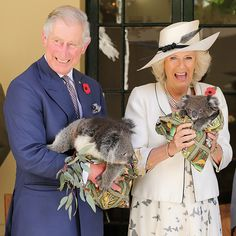 The royal couple's last visit to Australia and New Zealand was back in Above Prince Charles and Camilla are seen holding koalas Camilla Duchess Of Cornwall, Duchess Kate, British Monarchy, Prince Of Wales, Funny Moments, Funniest Moments, Funniest Photos, Funny Photos, Elizabeth Ii
