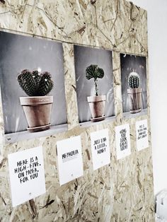 Cactus and posters