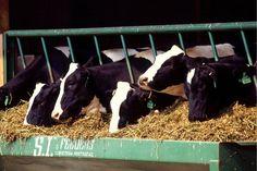 Preisdumping: Milch soll erneut billiger werden