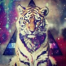 fotos de tigres tiernos - Buscar con Google